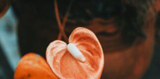jak pielęgnować kwiat doniczkowy anturium?